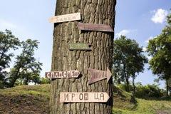 树在有标志的森林对此 库存图片