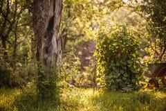 树在有独轮车的夏天庭院里,水平 图库摄影