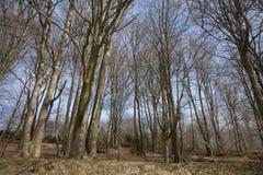 树在有蓝天的森林里 免版税图库摄影