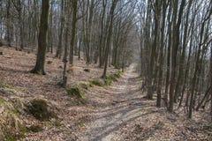 树在有蓝天的森林里 免版税库存照片