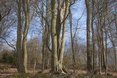 树在有蓝天的森林里 免版税库存图片
