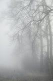树在有薄雾的森林里 库存图片