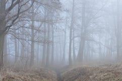 树在有薄雾的森林里 免版税库存图片