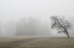 树在有雾的公园 库存照片