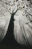 树在有雾的黑暗的可怕森林里在秋天 免版税库存照片