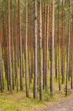 树在有青苔和秋天颜色的绿色森林里 免版税库存图片