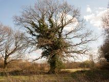 树在木头的一个春日 免版税库存图片