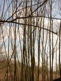 树在木头的一个春日 免版税图库摄影