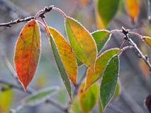 树在树冰的樱桃叶子 库存照片