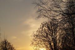 树在森林晚上背景中 免版税库存照片