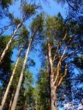 树在森林里在一秋天天 免版税库存图片