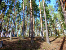 树在森林里在一秋天天 免版税库存照片