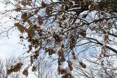 树在森林里在冬天 免版税图库摄影