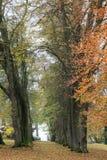 树在森林里在秋天 免版税库存照片