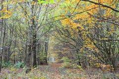 树在森林里在秋天 免版税库存图片