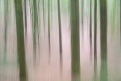 树在森林里拍摄与垂直的照相机运动 库存图片
