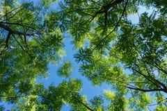 树在森林里 库存图片