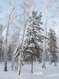 树在森林里 免版税图库摄影