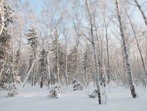 树在森林里 图库摄影