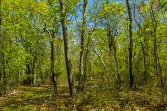 树在森林,东汉普顿,纽约 库存图片