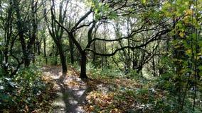 树在森林 库存照片