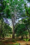 树在植物园里 库存图片