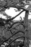 树在欺骗通行证国家公园华盛顿美国 库存图片