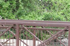 树在池塘的边在自然痕迹附近的 免版税库存照片