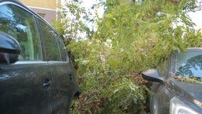 树在汽车落 灾害 强风 股票视频