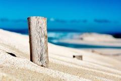 树在沙丘重踏 免版税图库摄影