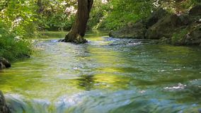 树在河用水洗涤 股票录像