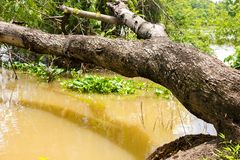 树在河看起来倒塌长木凳在河沿 免版税库存图片