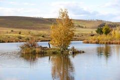 树在河 免版税库存照片
