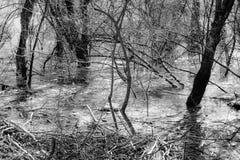 树在沼泽 库存照片