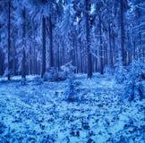 冻树在波兰的冬天 免版税库存图片