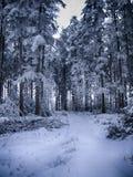 冻树在波兰的冬天 免版税库存照片