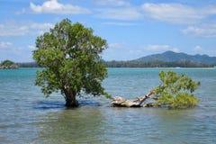 树在海岛上的水中 库存图片