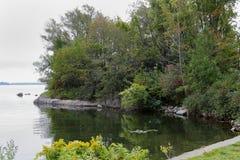 树在海湾的岸晃动 库存图片