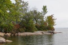 树在海湾的岸晃动 免版税库存图片