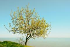 树在海边 图库摄影