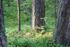 树在海附近的绿色草甸 免版税库存照片