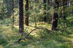 树在海附近的绿色草甸 免版税图库摄影
