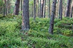 树在海附近的绿色草甸 库存照片