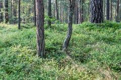 树在海附近的绿色草甸 免版税库存图片