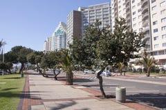 树在海滩前的德班的被排行的走道 免版税库存照片