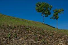 树在清楚的蓝天下 免版税库存图片