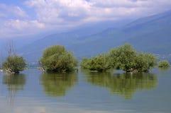 树在湖 免版税图库摄影