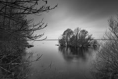 树在湖 图库摄影