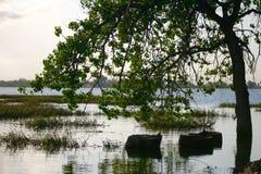 树在湖 库存照片