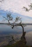 树在湖(Pisochne ozero,乌克兰) 免版税库存照片